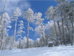snow_forests01.JPG