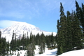 snow_forests02.JPG