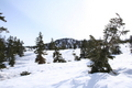 snow_forests04.JPG