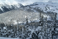 snow_forests05.JPG