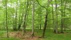 forest_community.JPG