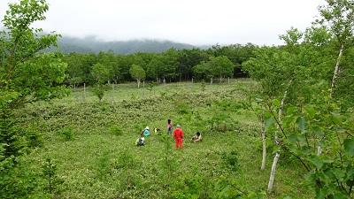 森林再生地における多様性と機能性